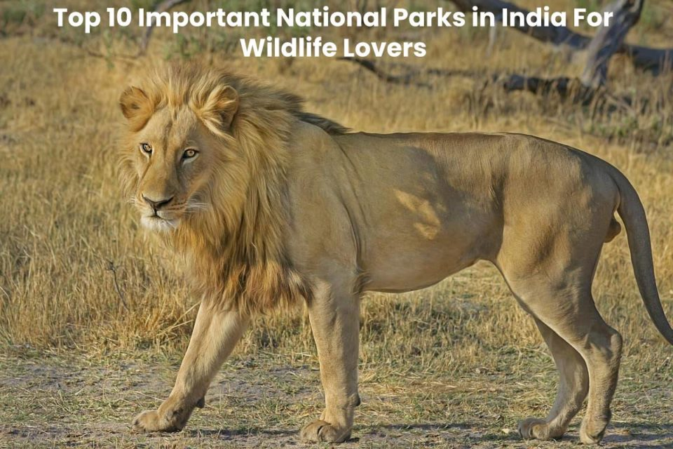 Top 10 Important National Parks in India For Wildlife Lovers