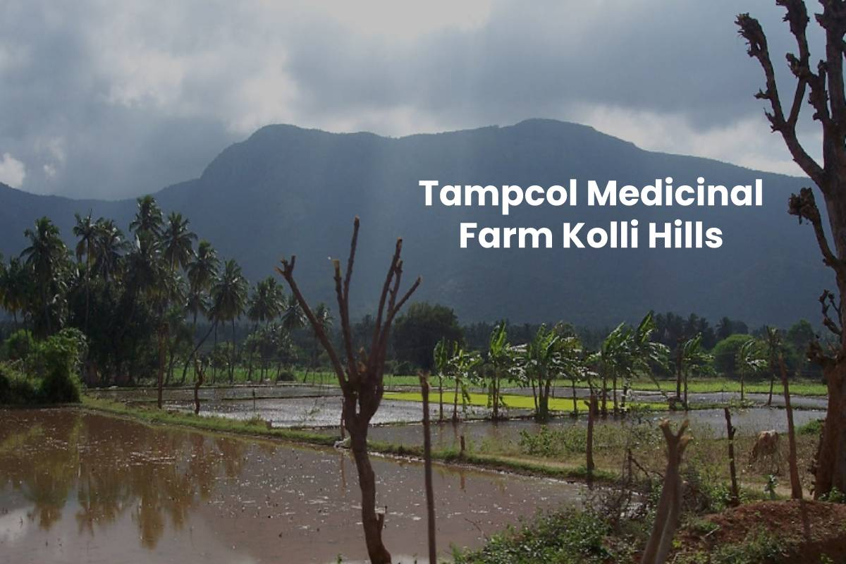 Tampcol Medicinal Farm Kolli Hills