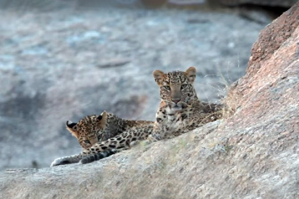 Travel Tips To Follow When You Go For Wildlife Safari In India