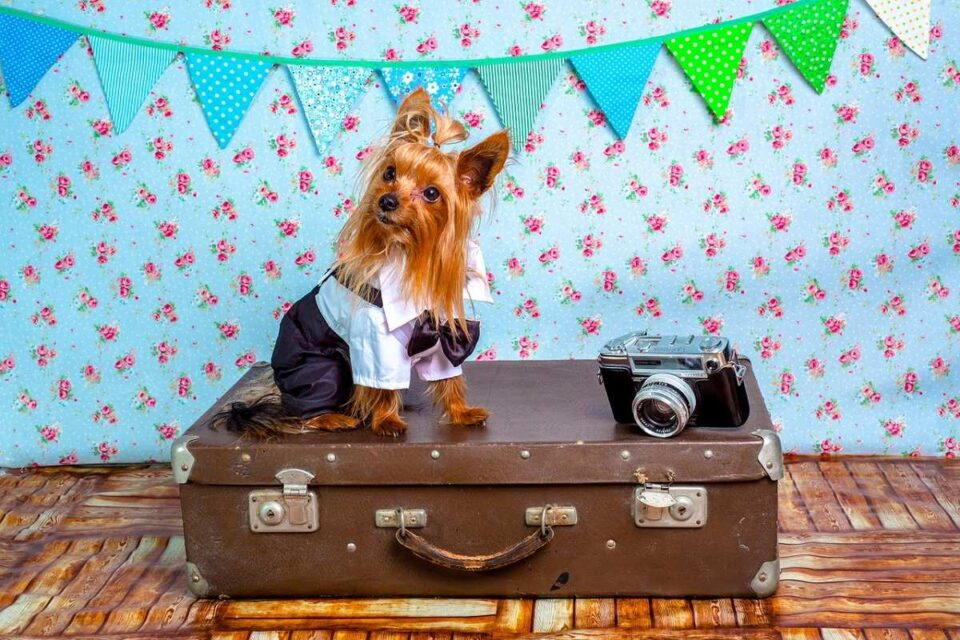 5 Point Checklist For Traveling With Your Pet